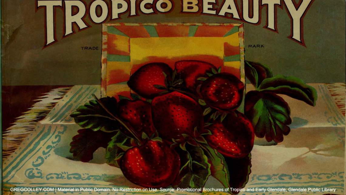 Tropico Beauty